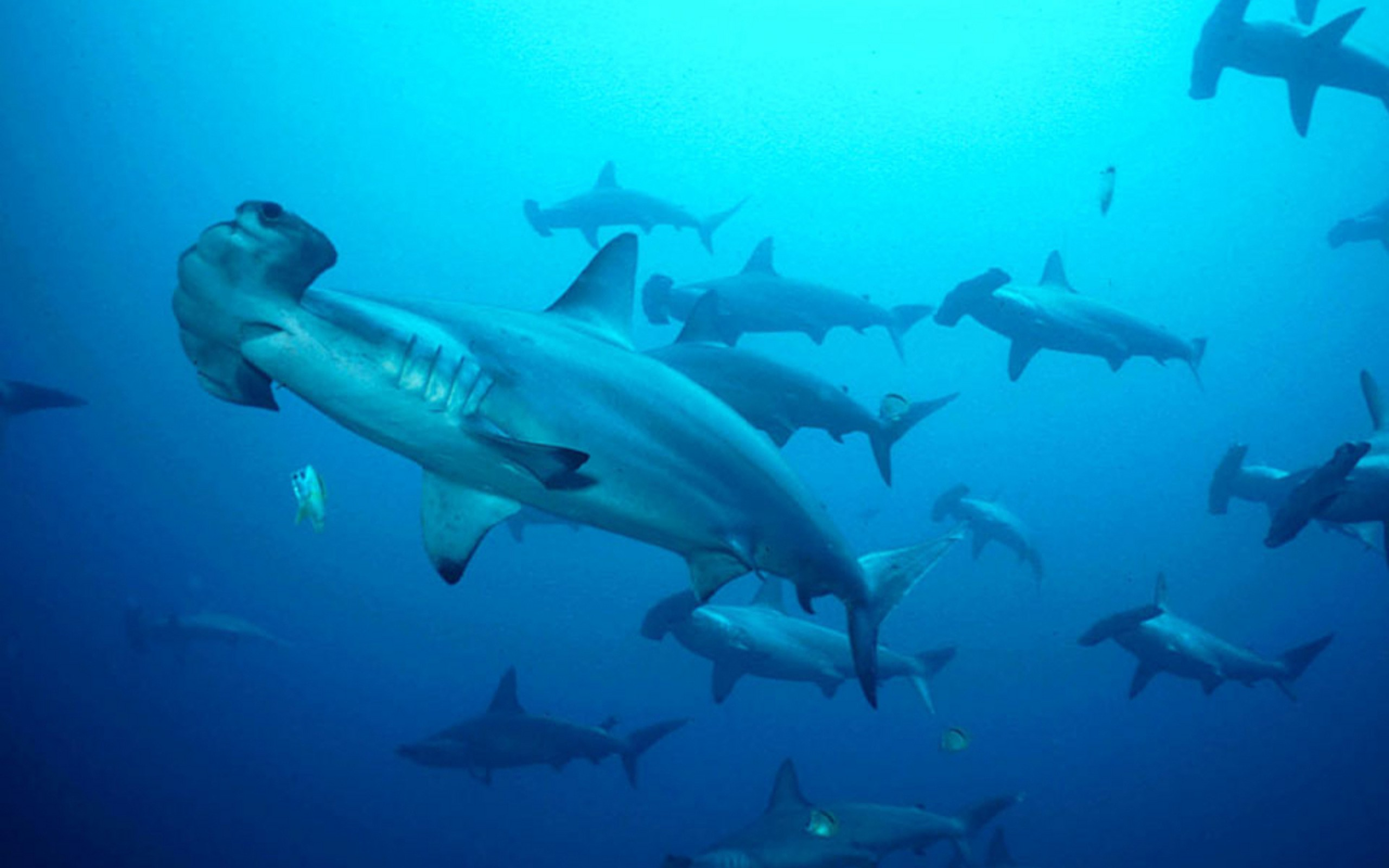Diving in Southeast Asia: Layang Layang