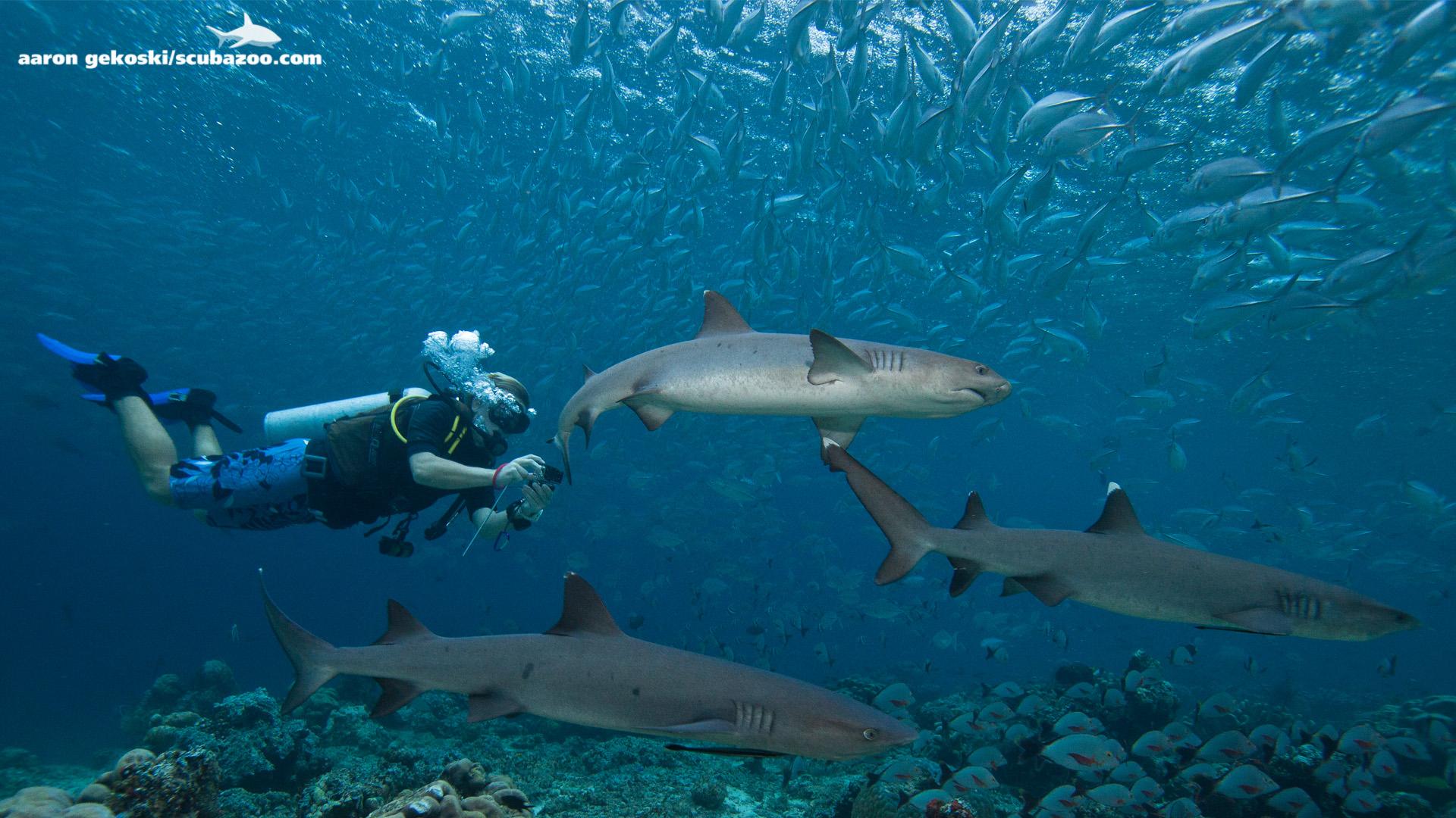 Diving in Southeast Asia: Sipadan