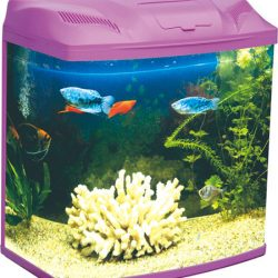 Five Star - Purple Mini Series Fish Tank