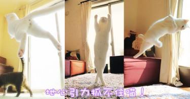 你一定看過牠~優雅得像芭蕾舞蹈員!日本超人氣無重力喵星人