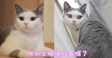 日本喵星人天生化妝臉~上眼線美豔動人,迷倒眾生!