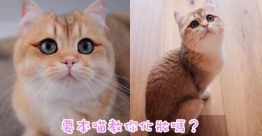 喵界化妝達人登場~澳洲貓女自帶深色眼線超嬌美!