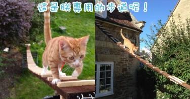 為了讓主子自由進出~英國貓奴為主子打造7米長梯!