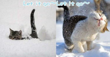 當喵星人遇上雪~8位主子為你呈現爆笑又可愛的畫面!