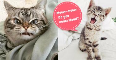 從叫聲了解主子心意!解讀6種貓咪叫聲~從此跟貓咪的心更貼近!