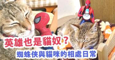 英雄也是貓奴?蜘蛛俠與貓咪的相處日常~英雄也會被可愛的貓咪萌倒啊!