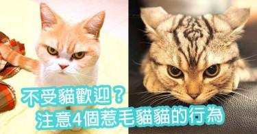 不受貓歡迎?注意4個惹毛貓貓的行為~貓奴記得不要這樣做啦!