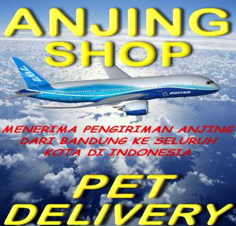 Von Javelline Kennel Breeder Anjing Ras Di Kota Bandung