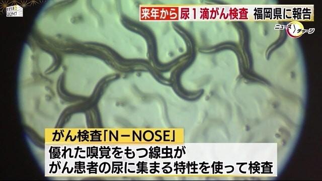 线虫生活在土壤中,没有眼睛和耳朵,但嗅觉非常灵敏。