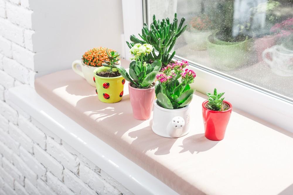 多在家中摆放室内植物。
