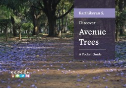 Discover Avenue Trees