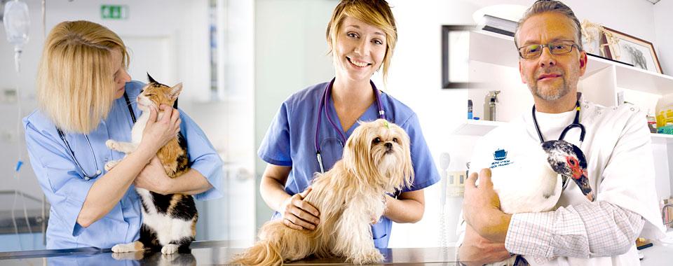 6 best industries of 2016 pet insurance