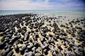 Shark Bay - Stromatolites  Western Australia - Australia Cathrin Eszbach