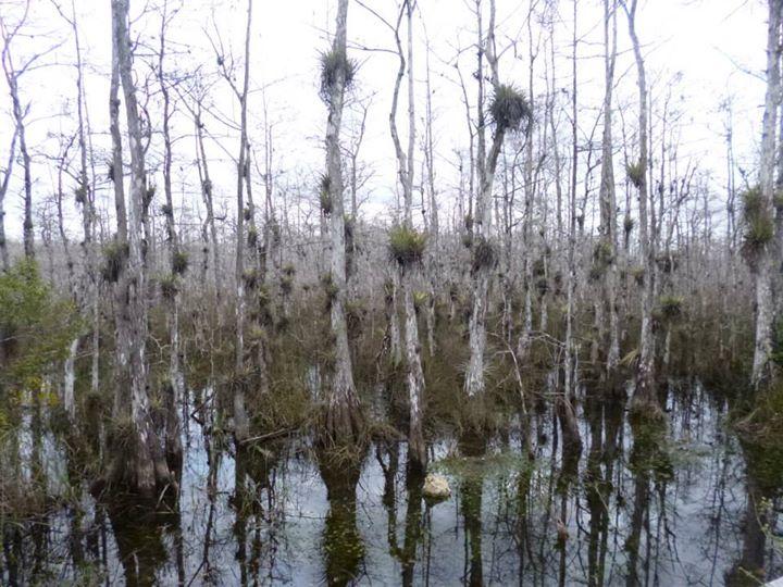 Everglades National Park - United States of America Charlotte