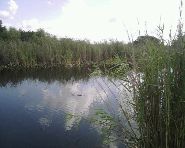 Everglades National Park - United States of America katherinealiza brownell