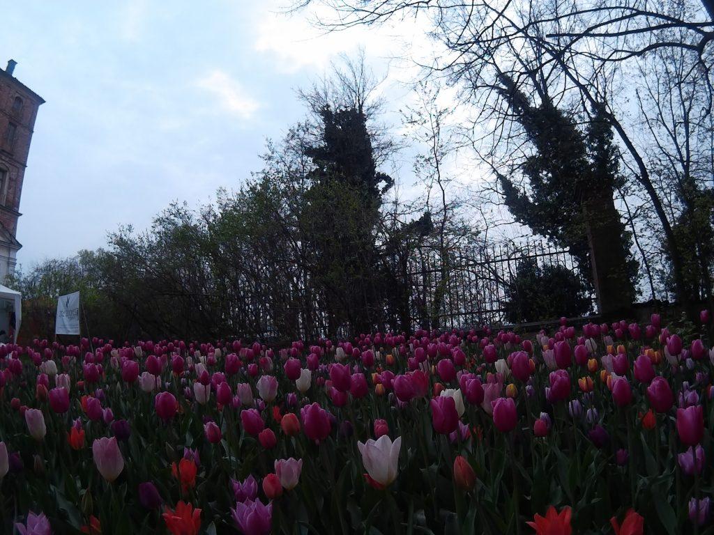 Messer Tulipano Pralormo Castle turin
