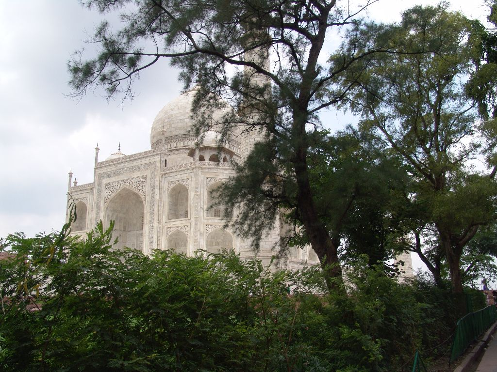 The taj behind trees
