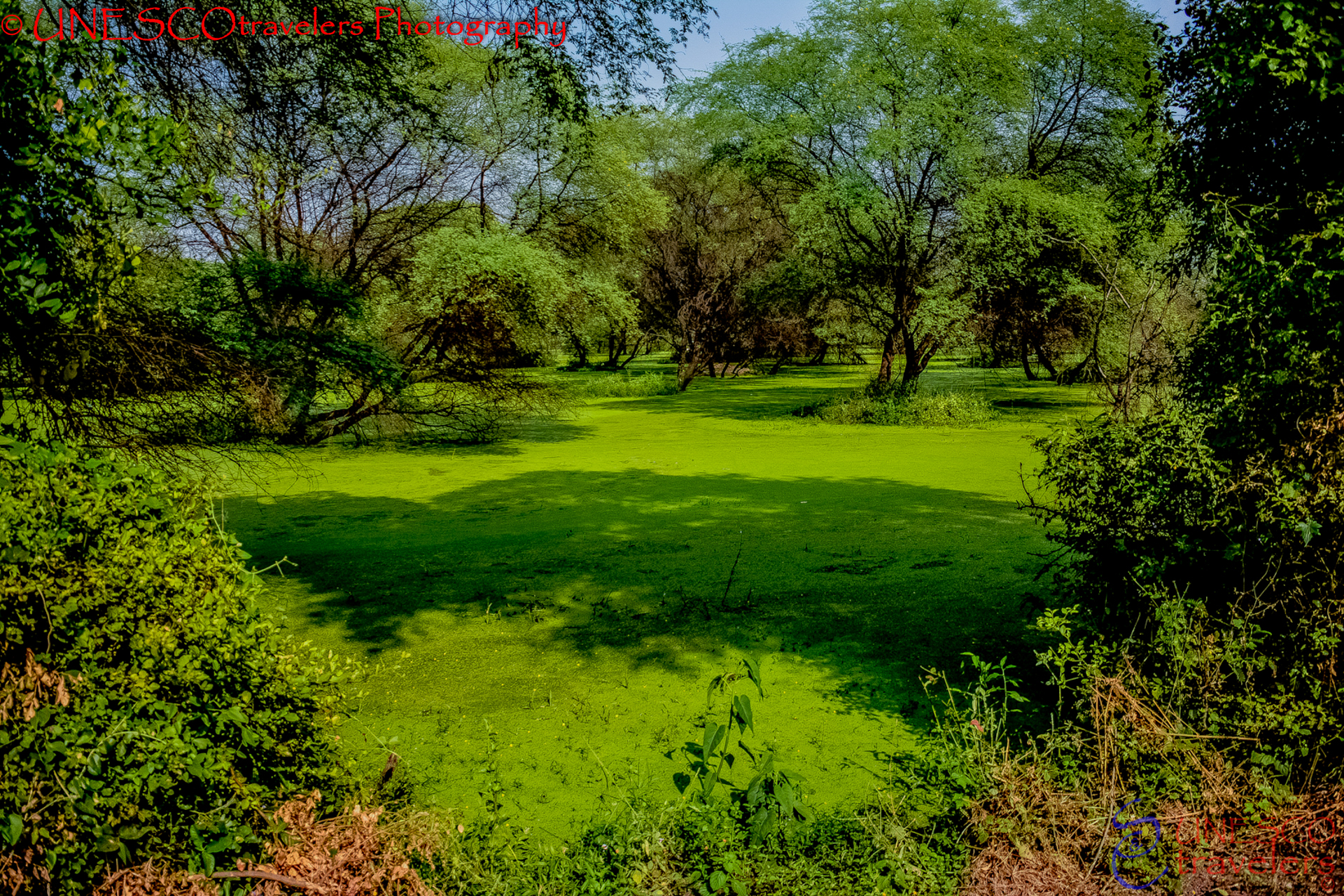 Keoladeo Bird Sanctuary
