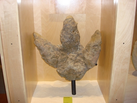 Dinosaur Footprint sm