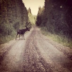 Muddus National Park, Laponia