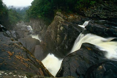 Rain forests of Astinana