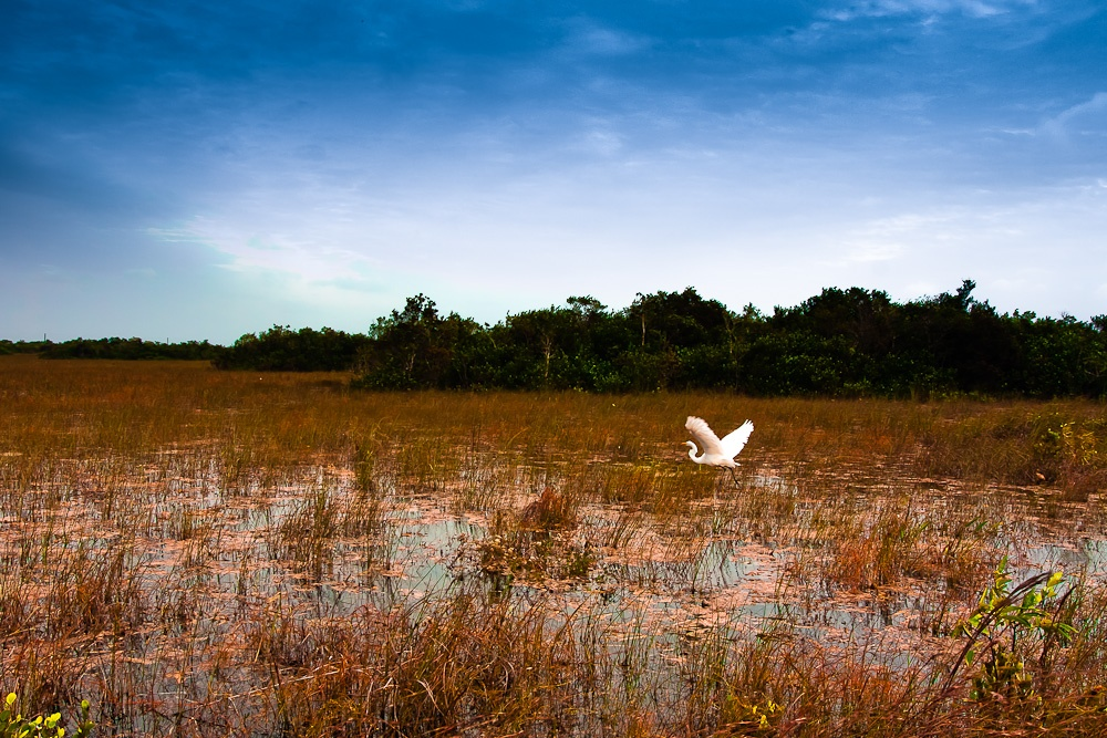 the issue of the threat to floridas everglades habitat loss The first time i waded thigh-deep in the waters of the magical everglades in south florida, it seemed like nature's resting place, with an air of prehistoric tranquillity.