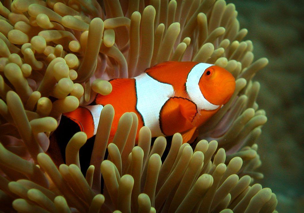 Found Nemo's cousin!