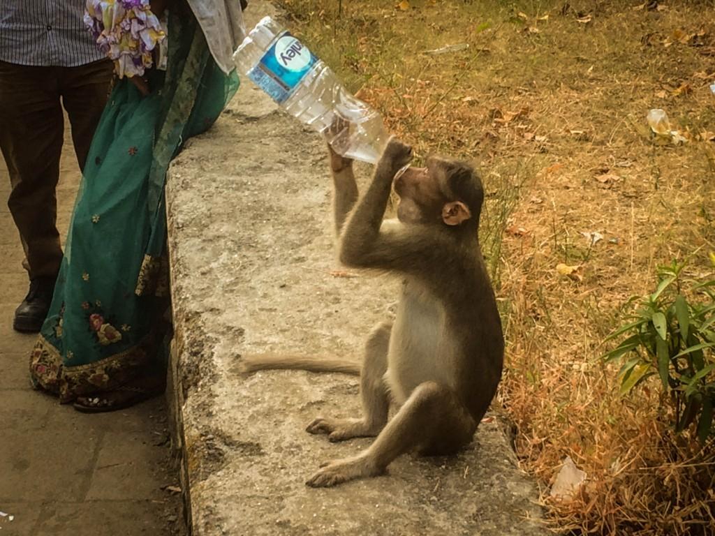 monkey-at-elephanta-caves-1024x768