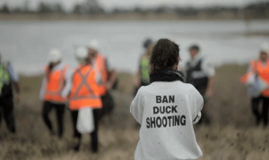 An anti-Hunting Protester Shot In Face By Duck Hunter