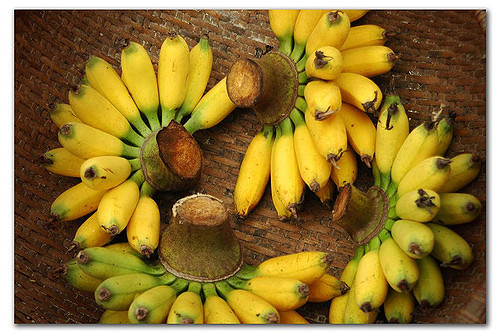 Bunches of banana fruit