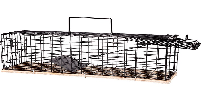 How to get rid of rats6