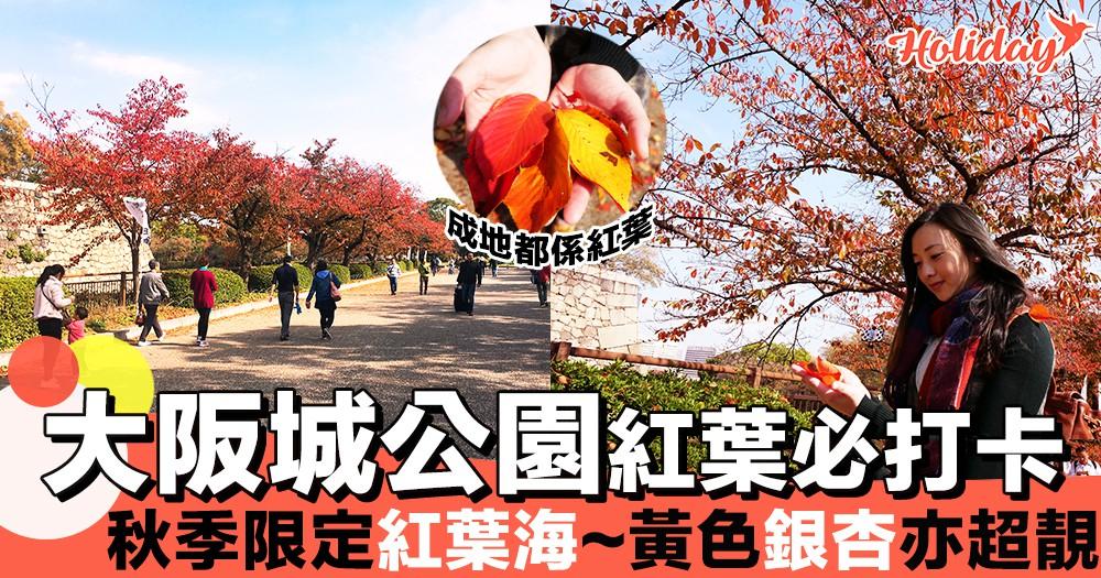 超靚滿地紅葉~日本大阪城公園必打卡紅楓美景!秋季限定橘紅海!