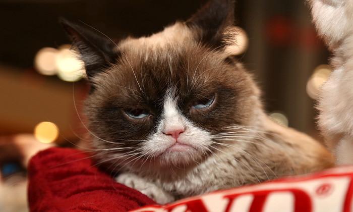 Grumpy cat Last word column