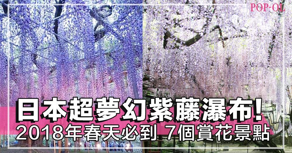像到了仙境般!2018春天必到打卡熱點,告訴你哪裏可以拍日本超夢幻的「紫藤瀑布」!