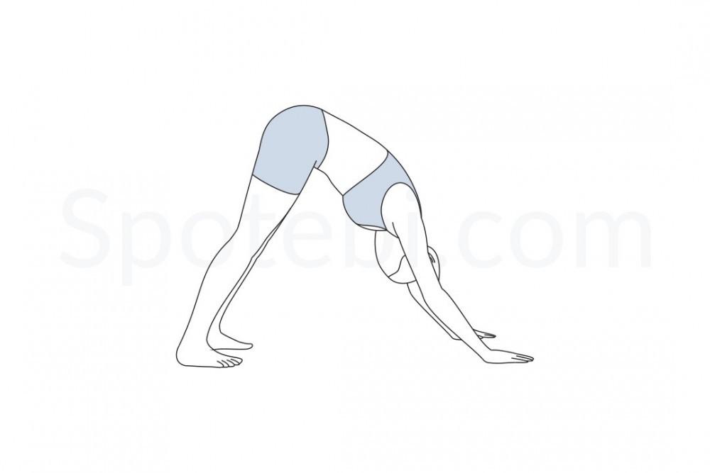 downward-facing-dog-pose-adho-mukha-svanasana