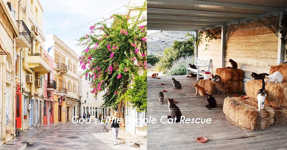 貓奴的夢幻工作: 看顧希臘小島貓咪收容所!每天都對著可愛貓咪和風光明媚的愛琴海美景!