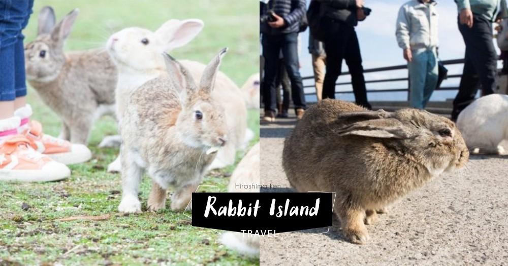 「下一站,請帶我去廣島的兔仔島!」滿滿的可愛兔仔圍著你跑,但原來牠們都有個悲慘身世
