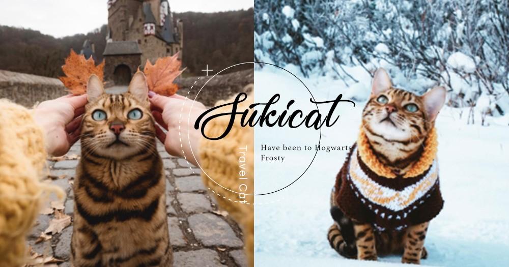 人氣Suki小貓遊遍世界各地,張張夢幻般絕美風景:喚醒我們的旅行夢!