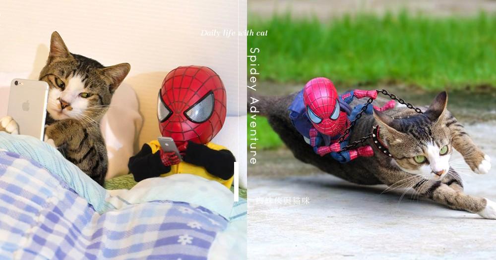 最佳拍檔:蜘蛛俠與貓咪的超爆笑日常!「自拍、做任務 每秒都在治癒心靈~」