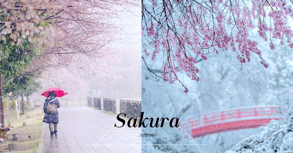 日本超罕有4月下雪:浪漫雪櫻絕景此生必看!