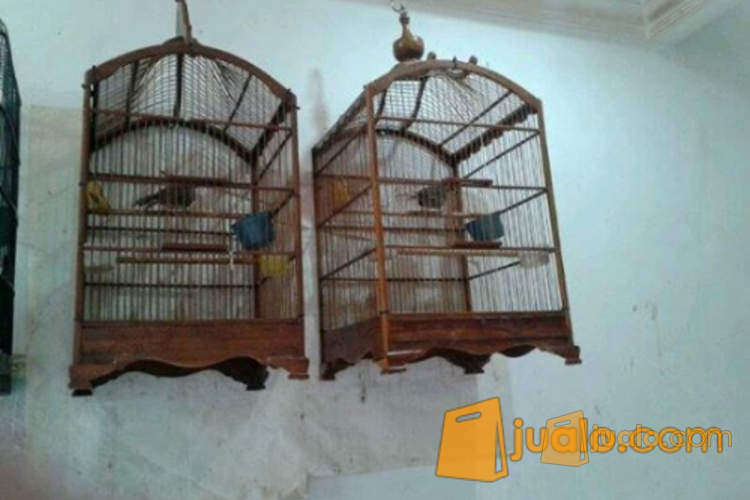 http://s3-ap-southeast-1.amazonaws.com/jualodev/original/1043124/cucak-rowo-sepasan-si-hewan-dan-perlengkapan-burung-1043124.jpg