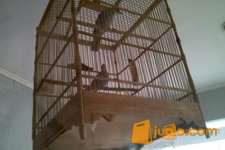 http://s3-ap-southeast-1.amazonaws.com/jualodev/original/1043129/-sepasang-burung-cuca-hewan-dan-perlengkapan-burung-1043129.jpg