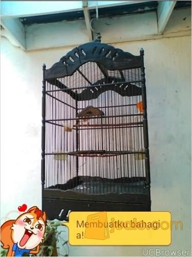 harga Jalak Suren Jawa Gacor Jualo.com