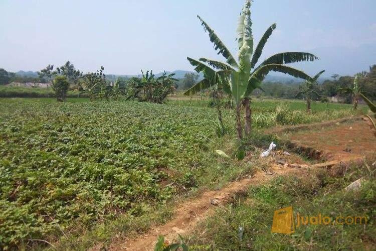 harga Dijual Tanah sawah seluas 860m2 di Cibinong Ciomas Bogor Jualo.com