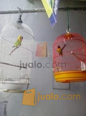 lovebird dakocan oliv