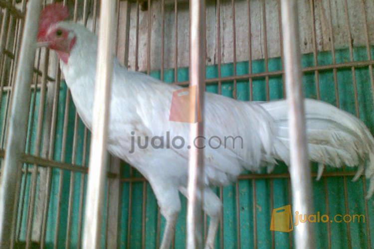 http://s3-ap-southeast-1.amazonaws.com/jualodev/original/558453/blob