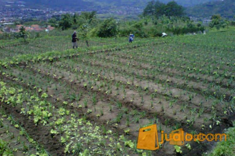 harga Tanah view ke kota Batu, cocok untuk Villa Jualo.com