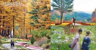 因《雲畫的月光》火紅的拍攝景點~京畿道的世外桃源:晨靜樹木園!