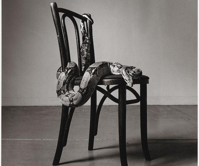 peter hujar u0027skippy on a chair iu0027 image