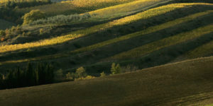 Lux Villas with Vineyards to Buy in Italy